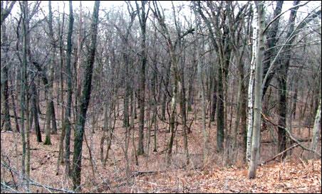 Difficult terrain but plentiful firewood await the gatherer at Skunk Hollow.