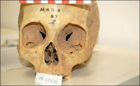 Researchers measured the brain cavity and eye socket sizes of 55 skulls dating back to the 1800's from museums in Oxford and Cambridge, England.