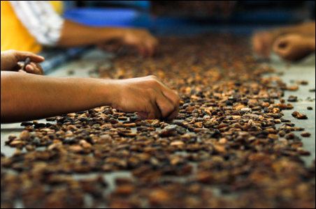 Workers sort cocoa beans in a warehouse in Makassar, South Sulawesi province.