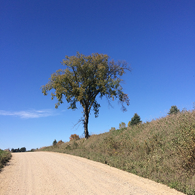 photo of lone tree on a dirt road