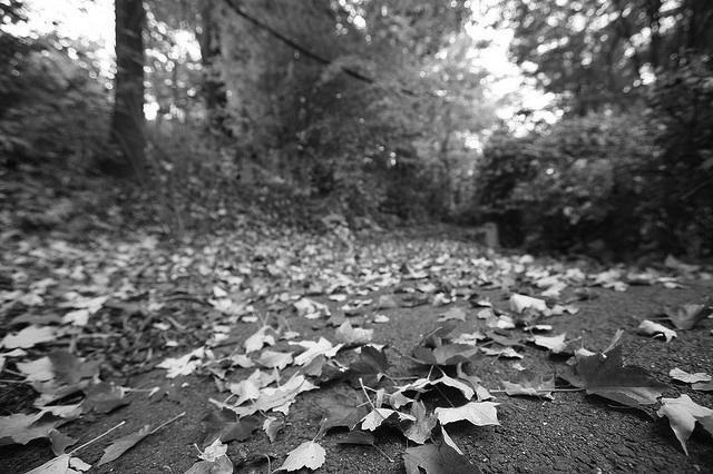 autumn path photo