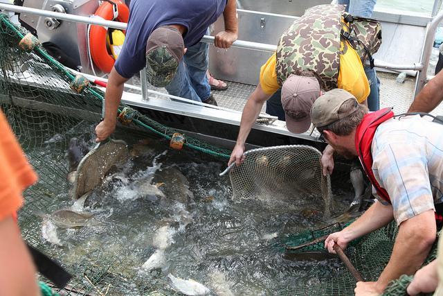 carp catching