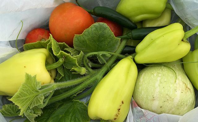 Vegetables grown this summer