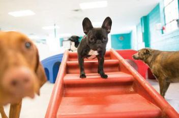 Pampered Pooch Playground in St. Louis Park