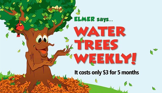 Elmer the Elm Tree