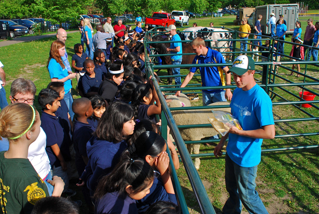 Front to back: Lloyd Lesmeister, Brady Wulf and Jake Moser of the Morris FFA Chapter show their livestock to Andersen School students