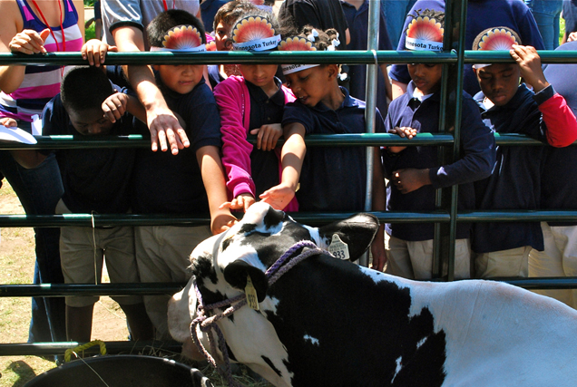 kids petting a cow