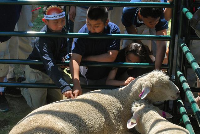 kids petting a sheep