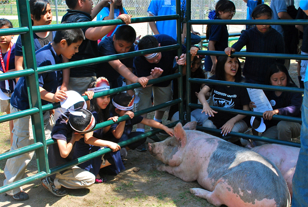 This was the first time most of our students had ever petted a pig