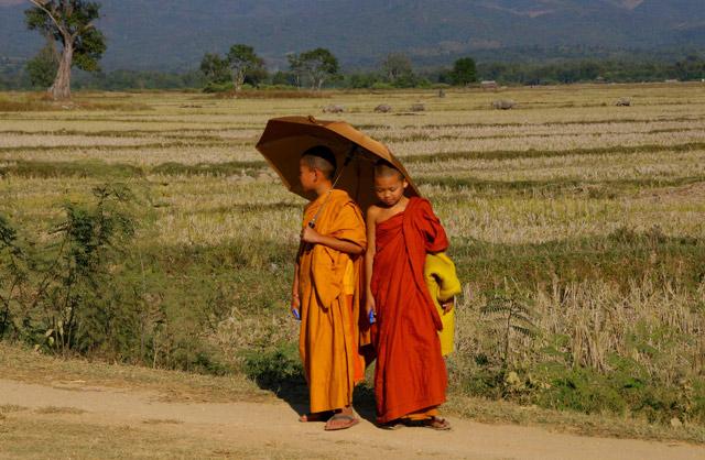 Young Burmese monks